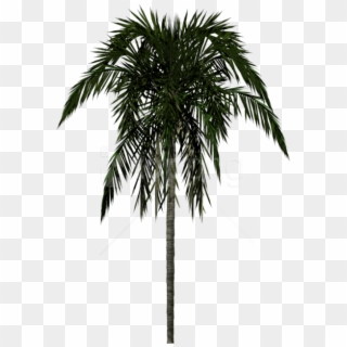 3d Palm Tree - Desert Palm, HD Png Download - 772x494 (#2269062