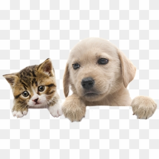 Free Dogs And Cats Png Images Dogs And Cats Transparent Background Download Pinpng