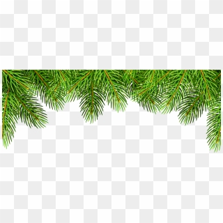 Christmas Tree Top View.Free Pine Tree Top View Png Images Pine Tree Top View