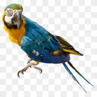 Free Parrot Images PNG Images | Parrot Images Transparent