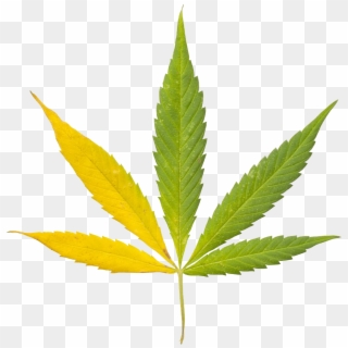 Free Weed Plant PNG Images   Weed Plant Transparent