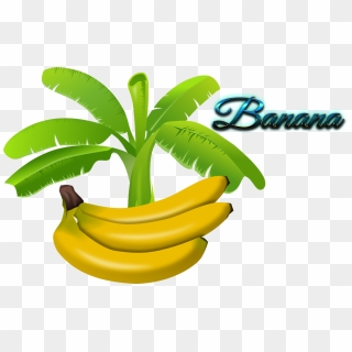 banana tree vector png daun pisang vector png transparent png 740x720 1792518 pinpng banana tree vector png daun pisang
