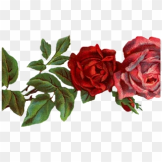 Free Roses Tumblr Png Images Roses Tumblr Transparent Background
