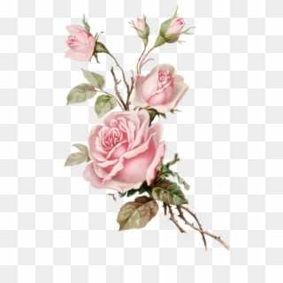Free Rose Png Images Rose Transparent Background Download