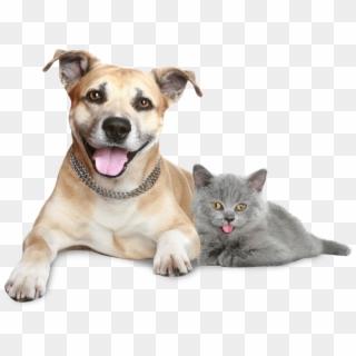 Free Dog Cat Png Images Dog Cat Transparent Background Download Pinpng